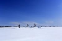 北海道 畑と木立