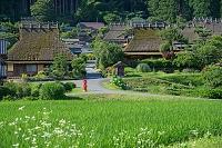 京都府 茅葺の郷 夏景