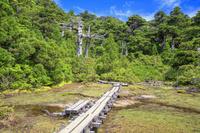 鹿児島県 小花之江河より黒味岳 高層湿原と原生林 屋久島