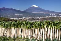 静岡県 三島