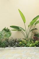 南国植物と壁面