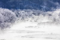 北海道 霧氷の雪裡川とタンチョウヅル