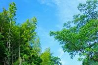 高知県 新緑の木と青空