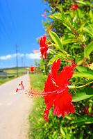 沖縄県 小浜島 シュガーロード