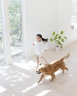 部屋を走る女の子とゴールデンレトリバー 犬