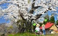 桜の木の下で遊ぶ家族
