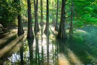 福岡県 九大の森