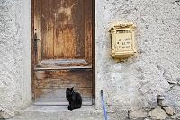 猫 フランス ミディ・ピレネー地方