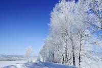 北海道 霧氷と雪の道