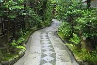 京都府 祇園 お茶屋の庭