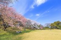 千葉県 佐倉城址公園