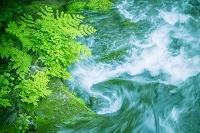 青森県 渓流とシダ葉と苔の岩