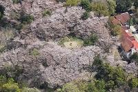 東京都 新宿区 戸山公園(桜)