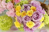 紫と黄色のバラ