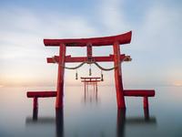 佐賀県 大魚神社の海中鳥居の夜景