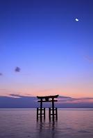 滋賀県 白鬚神社 夜明けの湖中大鳥居と琵琶湖と残月
