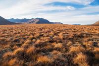 秋のトゥームストーン準州立公園 谷地坊主の紅葉
