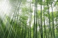 竹林と太陽光