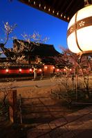 京都府 北野天満宮 明かり灯る国宝本殿と紅白梅