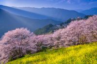 高知県 桜の集落の春
