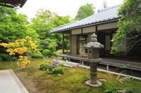 京都府 新緑の源光庵の庭園