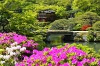 新緑、相楽園ツツジと池泉回遊式庭園の船屋形