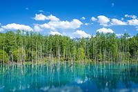 日本 初夏の青い池