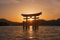 広島県 厳島神社 大鳥居 夕景