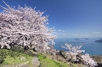 桜咲く紫雲出山と瀬戸内海