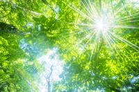 新緑の森に木漏れ日