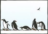 アデリーペンギンの行進