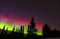アメリカ合衆国 アラスカ フェアバンクス オーロラとタイガの森