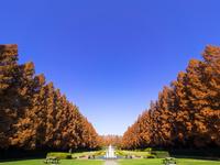 神奈川県 相模原公園