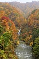 青森県 白神山地 暗門川