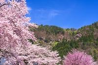 山形県 桜と立石寺立石寺