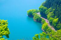 東京都 奥多摩湖の新緑と道