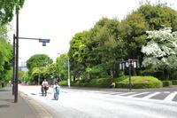 東京都 日曜日の神宮外苑