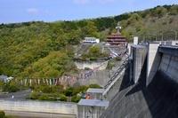 兵庫県 新緑 鯉のぼりと一庫ダム