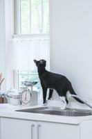 キッチンに乗って見上げる猫
