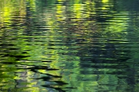 水辺の動きと新緑の映り