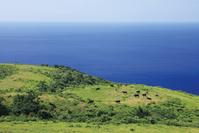 島根県 国賀海岸 赤尾展望所からの眺望