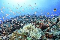 海中のイメージ サンゴ礁