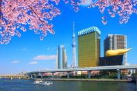 東京都 隅田公園の桜と隅田川 墨田区役所とスカイツリーとアサ...