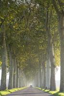 道と並木道