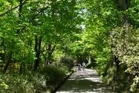 新緑 葛城山遊歩道