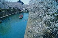 岐阜県 桜咲く水門川 水の都おおがき舟下り