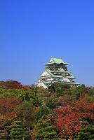 大阪府 大阪城天守閣と紅葉の大阪城公園