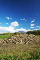 北海道 斜里岳とビート