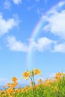 長野県 霧ヶ峰高原 ニッコウキスゲの花畑と青空 合成 デジタ...