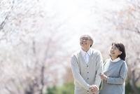 桜並木を散歩するシニア夫婦